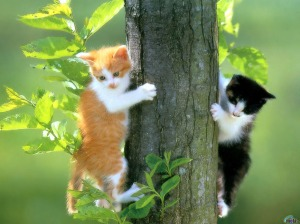 Cats_wallpapers_5