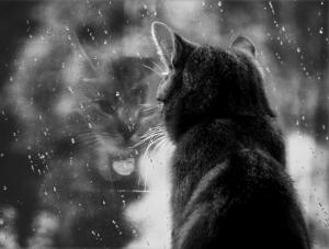 rain_photo5